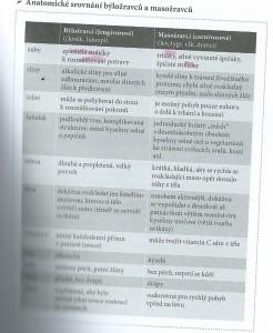 Porovnani nanatomie masozravcu a bylozravcu